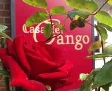 Tango-Argentino für Anfänger und Einsteiger